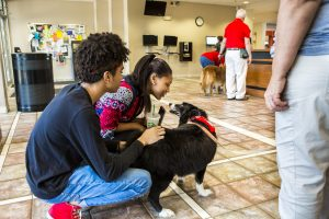 Pet Therapy Sp17 _ 01